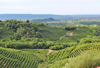 Trevisio Italy